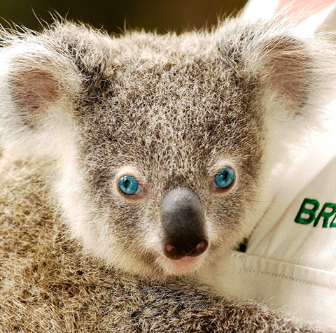 Dreamworld's-young-blue-eye
