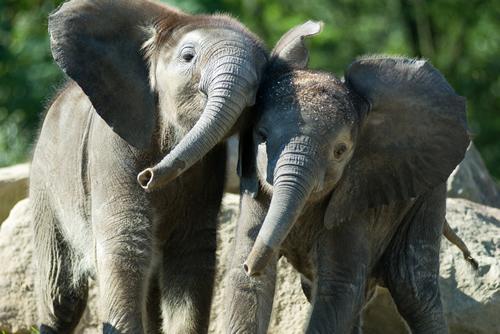 Baby elephants pittsburgh zoo