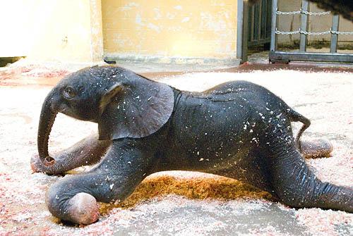 Baby elephants pittsburgh zoo newborn
