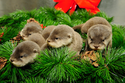 otters on wreath