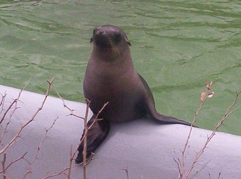 Sea lion pup bronx zoo