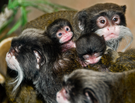 Monkeys2_cropped