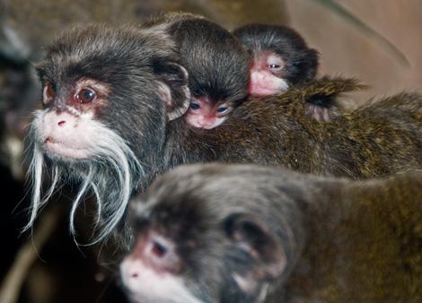 Monkeys1