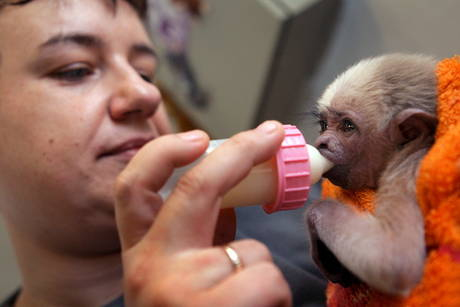 Baby gibbon schwerin zoo 2