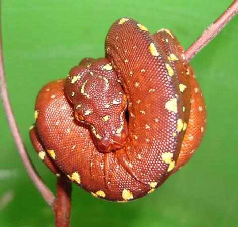 Python7