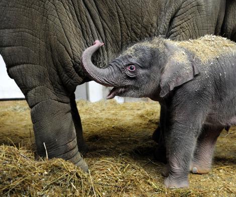 Baby olifant 5