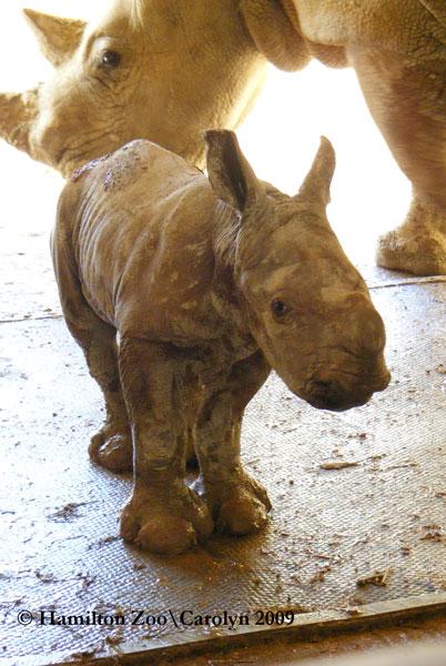 Rhino-1st-day