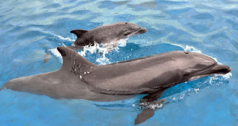 Dolphin calf sea world ab
