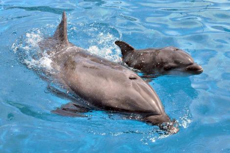 Dolphin calf sea world 2 ab
