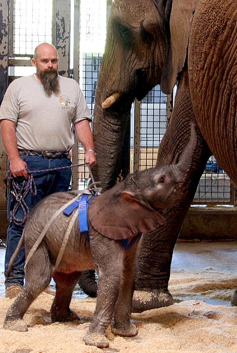 Baby elephant hogle zoo 1