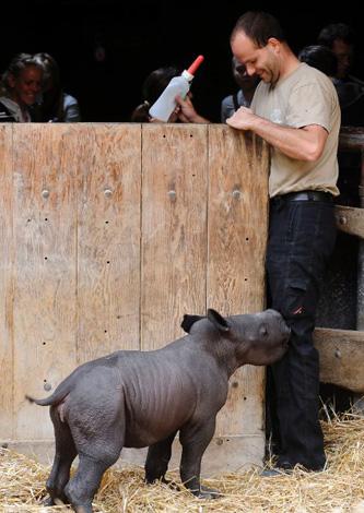Baby-Rhino-Knee-Nibbling