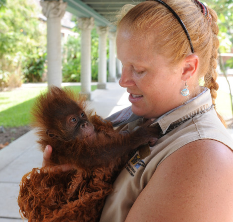 Baby orangutan audubon zoo 3 rs