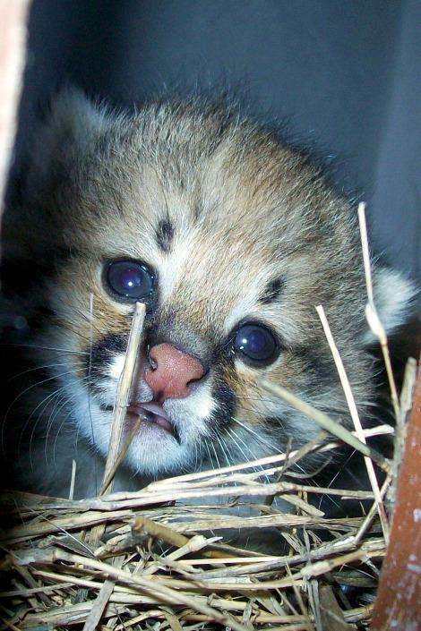 M'Bopicuá Regalo Pampas Cat Baby Kitten rs