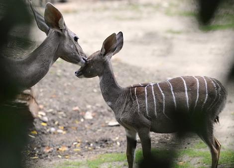 Baby antelope zoo basel 2 rs