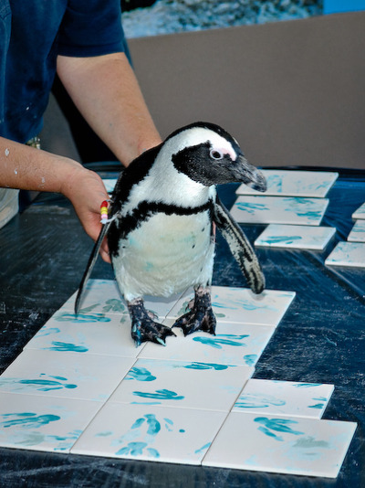 Painting penguin mystic aquarium