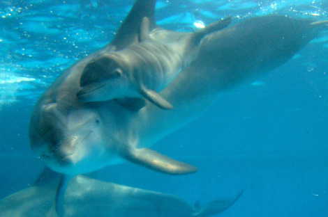 Dolphin Calf National Aquarium 2 rs