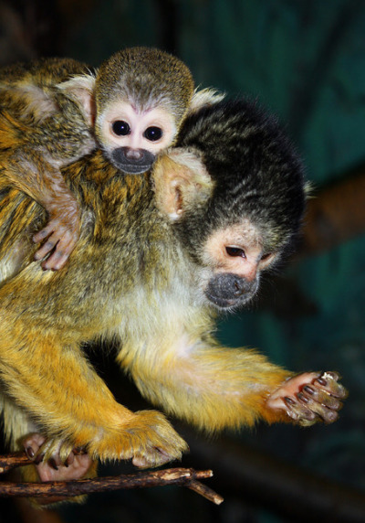Baby monkey edmonton zoo 2