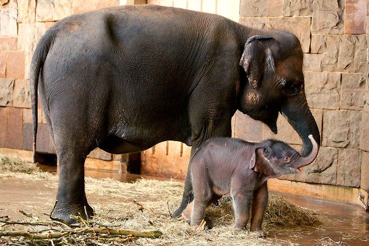 Elefantenbaby_1