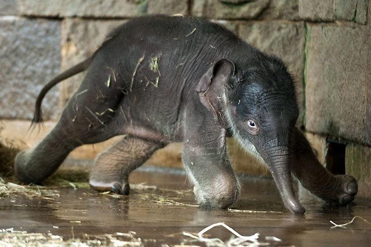 Elefantenbaby_5