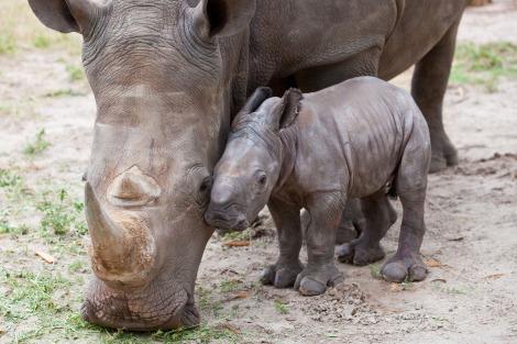 Rhino busch gardens tampa 4 rs