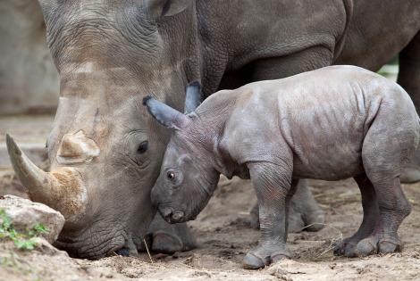 Rhino busch gardens tampa 2 rs