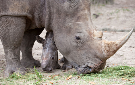 Rhino busch gardens tampa 1 rs2