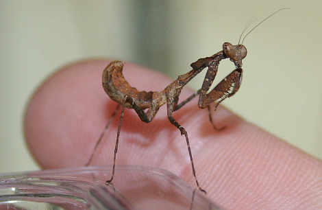 Insect Zooborns