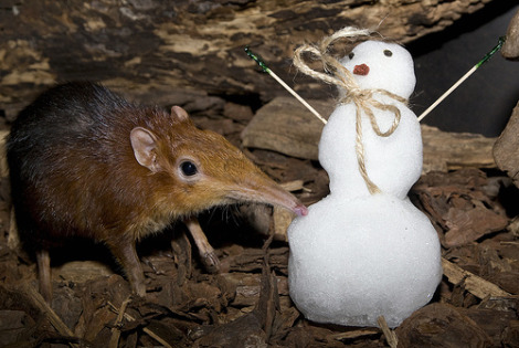 Elephant shrew and snowman national zoo mehgan murphy