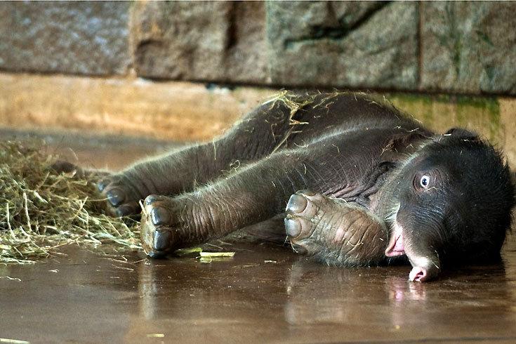 Elefantenbaby_2