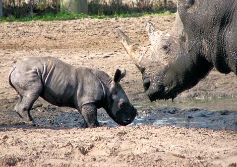 TLPZ-w-rhino-mud-wallow