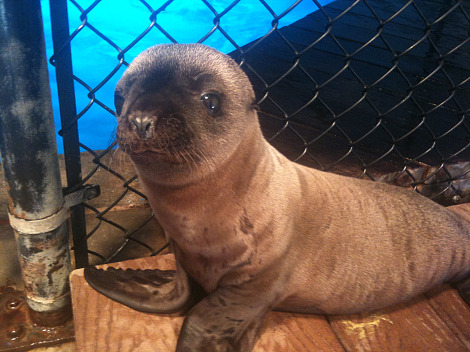 Baby sea lion pup oceans of fun 1