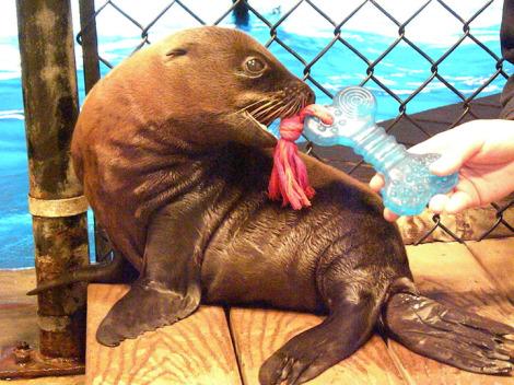 Sea lion pup oceans of fun 5