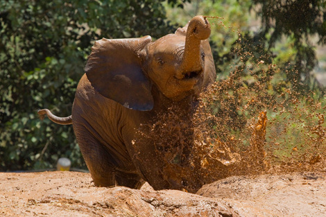 MuddyBoyElephant_003_Web
