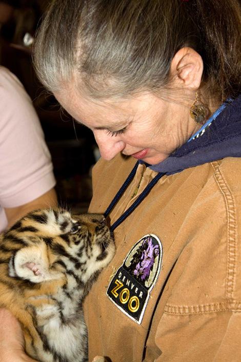 Denver Zoo Baby Tiger3