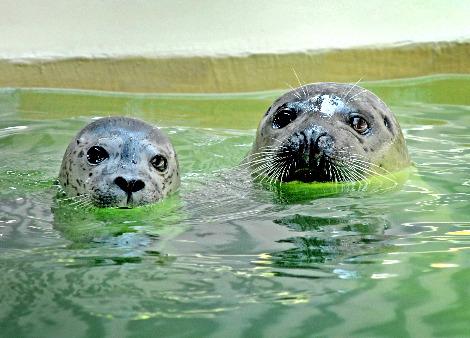 Baby seal los angeles zoo 2