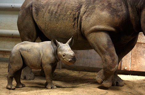 Cleveland-Black-Rhino-4