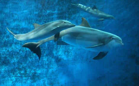 Minnesota-zoo-dolphin-1