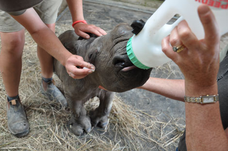 Rhino-Bottle-Feeds