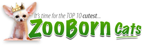 Top-Ten-ZooBorn-Cats
