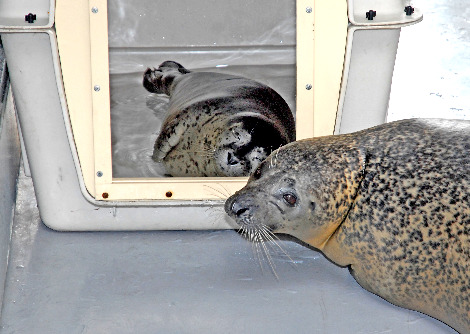 Baby seal los angeles zoo 1