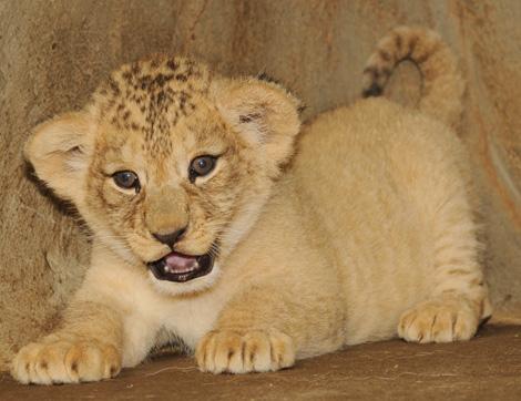 Cubs-1