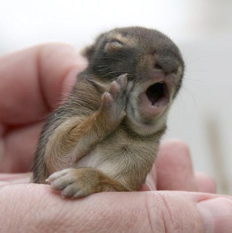Baby cottontail rabbit pequot nature center 1