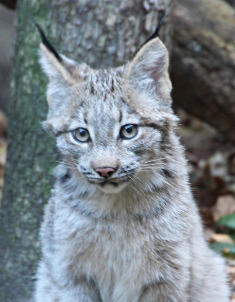 Minnesota-lynx-5
