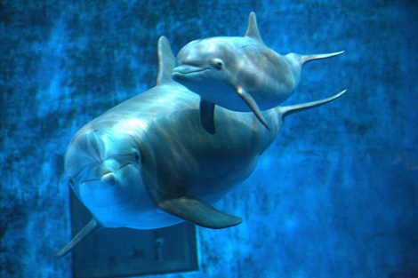 Minnesota-zoo-dolphin-2