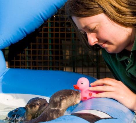 Baby otter swim lesson longleat safari park