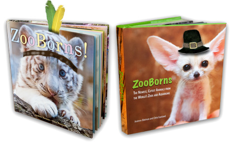 ZooBorns-Thanksgiving-Books
