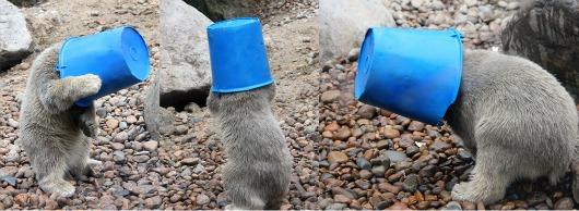 Bucket head aalborg zoo 2
