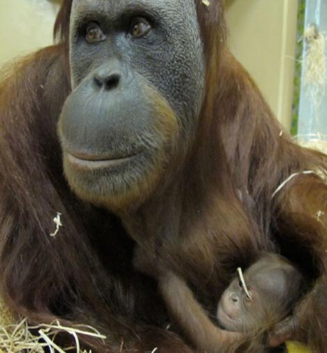 Orang-birth-3148-web450