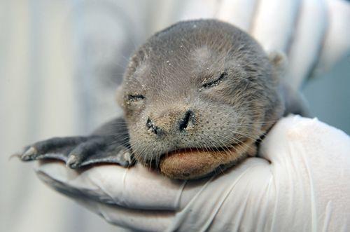 Miami-Zoo-River-Otters-7