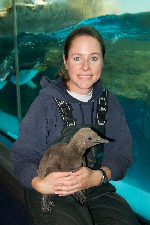 Seaworld_Orlando_Penguin_Chicks_1